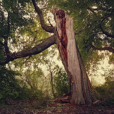 The Old Forest VIII - p1633m2297677 by Bernd Webler