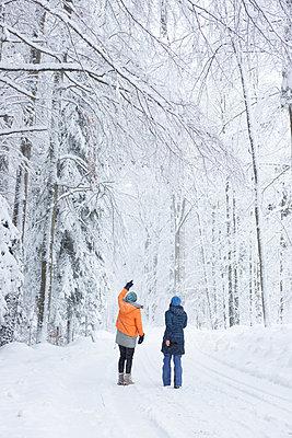 Magic winter forest - p454m2071799 by Lubitz + Dorner