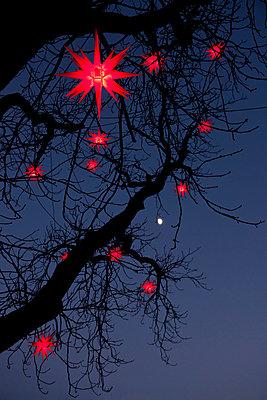 Leuchtende Sternlampions - p533m1474783 von Böhm Monika
