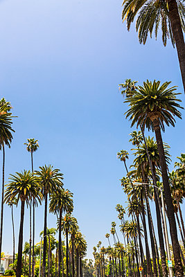 Beverly Drive, Beverly Hills, California, United States of America, North America - p871m2023357 by Toms Auzins