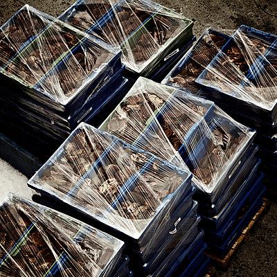Frische Muscheln unter Plastikfolie, Brönnöysund, Norwegen - p1065m891804 von KNSY Bande