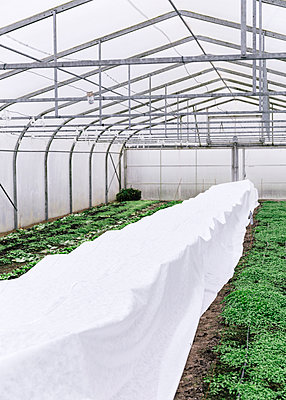 Greenhouse, covered plants - p1085m2177955 by David Carreno Hansen