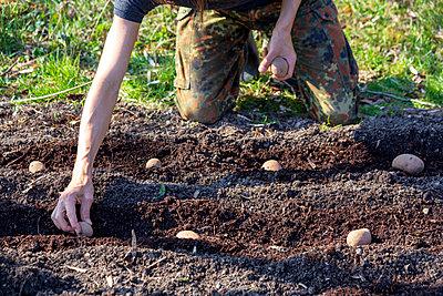 Man planting potato - p300m2104184 by Nabiha Dahhan