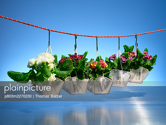 Springtime 2021 - p803m2270230 by Thomas Balzer