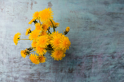 Bunch of dandelions - p300m1140913 by Mandy Reschke