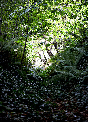 View through sunlit woodland path;  Isle of Wight;  UK - p349m920042 by Rachel Whiting