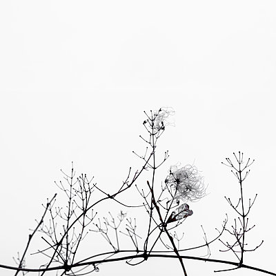 Delicate plants in Winter - p1228m1528647 by Benjamin Harte
