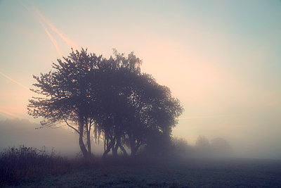 Morning fog - p992m1093032 by Carmen Spitznagel