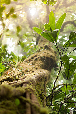Monteverde - p1293m1128520 by Manuela Dörr