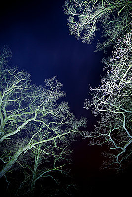 Bäume in der Nacht - p248m791445 von BY