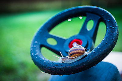 Snail wants to drive - p829m972300 by Régis Domergue
