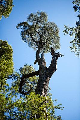 Tree - p842m890979 by Renée Del Missier