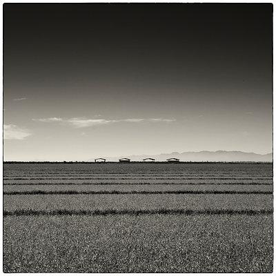 California, Brawley - p1154m1057864 von Tom Hogan