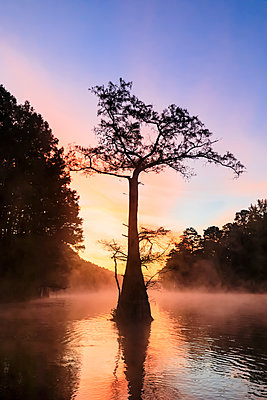 USA, Texas, Louisiana, Caddo Lake, Big Cypress Bayou, bald cypress forest at sunrise - p300m1449456 by Fotofeeling