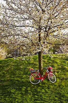 Blossoming tree - p464m1026008 by Elektrons 08