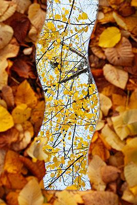 Spiegelung der Natur - p728m1193634 von Peter Nitsch