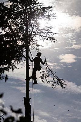 Man in a tree - p739m715430 by Baertels