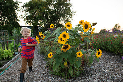 Blond haired boy running past sunflowers in garden - p924m2003787 by Viara Mileva