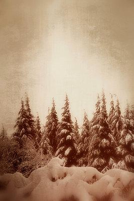 Nadelwald im Schnee II - p597m883481 von Tim Robinson