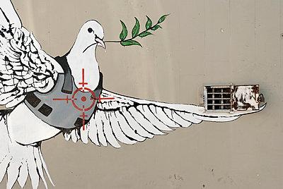 Friedenstaube im Visier - p759m1171579 von Stefan Zahm