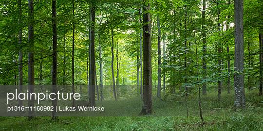 Schnellmarker Holz, Eckernförde, Rendsburg-Eckernförde, Schleswig-Holstein, Deutschland - p1316m1160982 von Lukas Wernicke