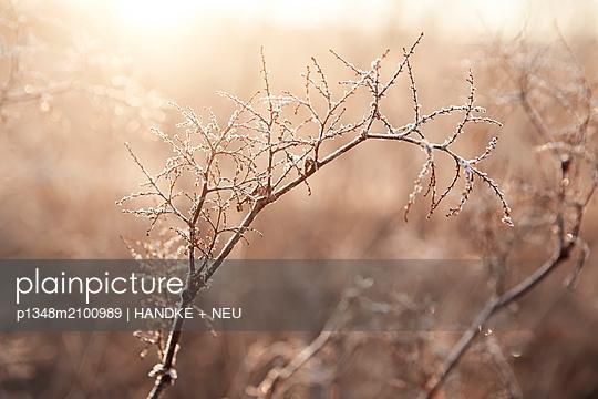 p1348m2100989 by HANDKE + NEU