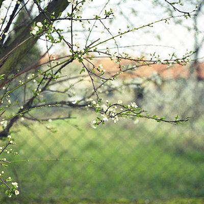 Blick durch einen Zaun in einen Hinterhof, Sarreguemines, Frankreich - p1026m834345 by Alexandra Dost
