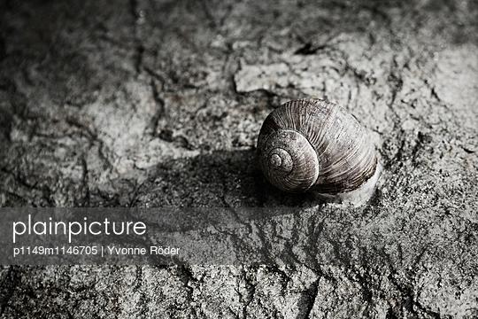 Snail - p1149m1146705 by Yvonne Röder
