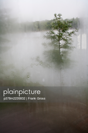 Tree through misted window - p378m2235832 by Frank Gross