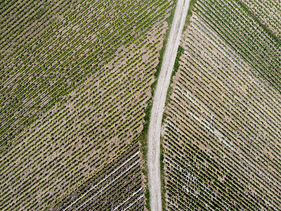 Champagne vineyards View from drone  - p590m2191531 by Philippe Dureuil
