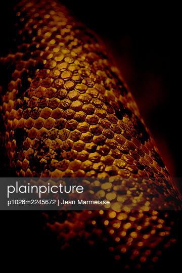 Snake scales - p1028m2245672 by Jean Marmeisse