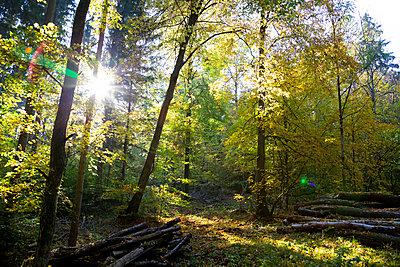 Germany, Bavaria, near Wuerzburg, Gramschatzer Wald in autumn - p300m2062234 by Nabiha Dahhan