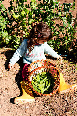 Little girl sitting on ground with basket of harvested pea pods - p300m2188691 by Gemma Ferrando