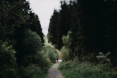 Wanderweg in Niedersachsen - p1184m1424521 von brabanski