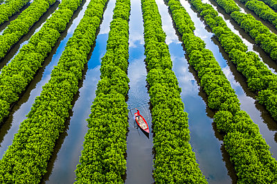 In the middle of mangroves forest, Quang Ngai, Vietnam, Indochina, Southeast Asia, Asia - p871m2209765 by Luong Nguyen Anh Trung