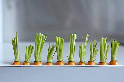 Karottenköpfe - p877m1191041 von Julia Wagner