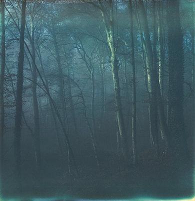 Wald - p1421m1476785 von Simon Fröhlich