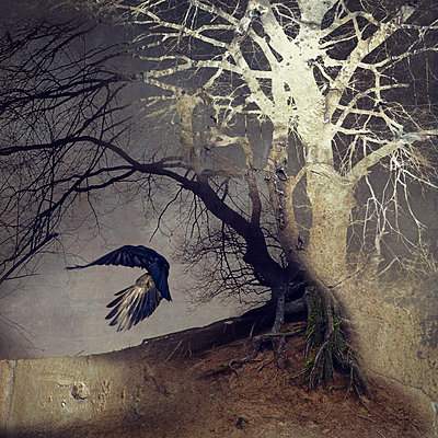 Black Winged Messenger Part XI - p1633m2208865 by Bernd Webler