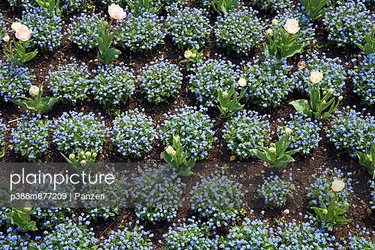 Flower bed - p388m877209 by Panzeri