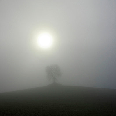 Misty - p813m755702 by B.Jaubert