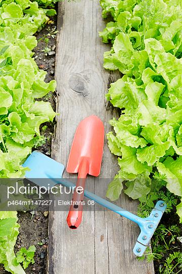 im Salatbeet - p464m1147227 von Elektrons 08