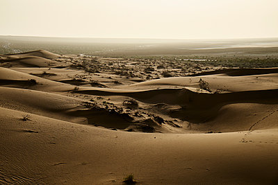 Wüstenlandschaft - p1146m1445156 von Stephanie Uhlenbrock