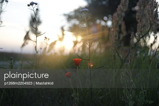 p1268m2204923 by Mastahkid