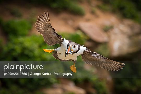 p429m2019766 von George Karbus Photography