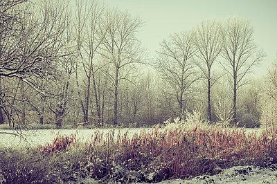 Germany, snow covered winter landscape - p300m911377f by Jana Mänz