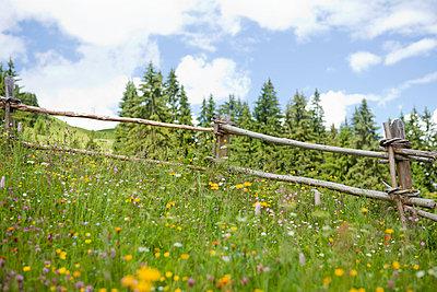 Zaun im Wald - p806m698807 von Levi + Lo