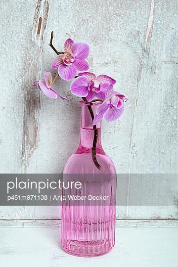 Orchid - p451m971138 by Anja Weber-Decker