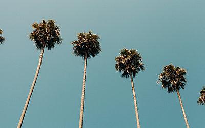 Palmen vor wolkenlosem Himmel - p1340m2108666 von Christoph Lodewick