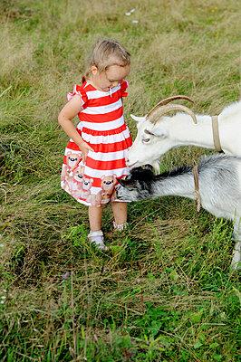 Little girl with goats  - p1412m2125648 by Svetlana Shemeleva