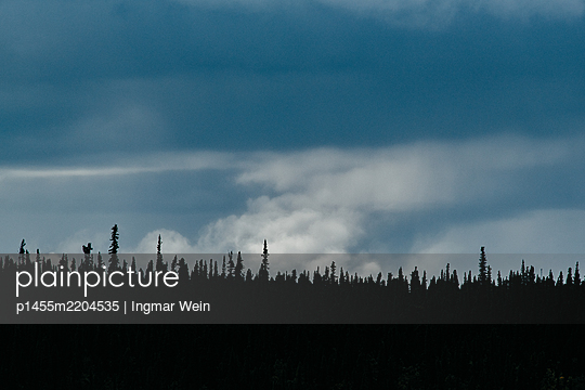 Coniferous forest with dark clouds - p1455m2204535 by Ingmar Wein